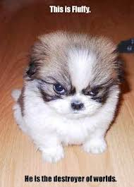 image of angry little puppy