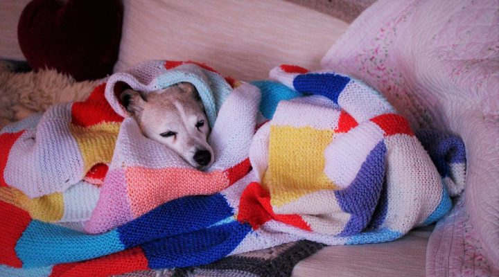 image of a dog wrapped in a blanket